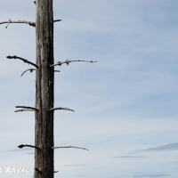 black_forest-9.jpg
