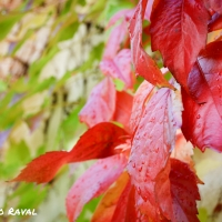 fall_in_germany-2