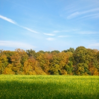 fall_in_germany-7
