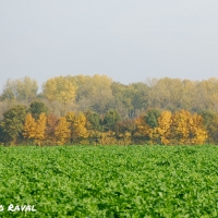 fall_in_germany-8