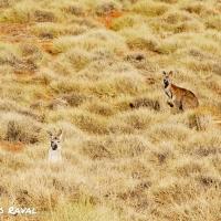 flinders_ranges_australia_04.jpg