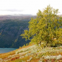 scandinavia_norway_sweden_autumn_picture-2776