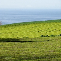 azores_picture-1469