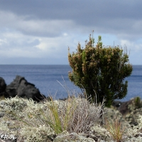azores_picture-1531