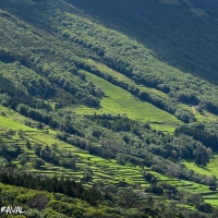 azores_picture-1561