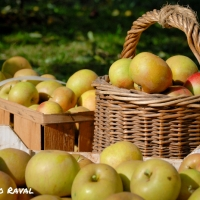 fall_in_germany-1