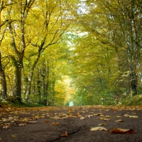 fall_in_germany-6