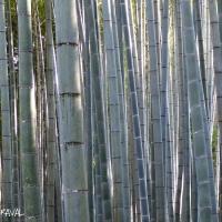 japan_pictures_roberdo_raval-8