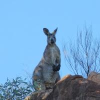 flinders_ranges_australia_02.jpg